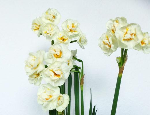 isabella-blume-flower-foodblogger