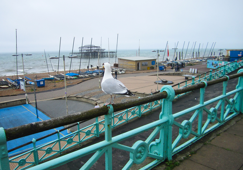 isabella-blume-brighton-uk-travelblogger-coastline